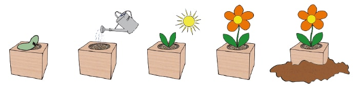Eco plant cubes growing instructions